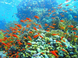 Coral Garden - Diving Phi Phi Island