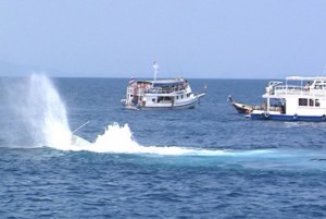 Gone - Dive Phuket Today