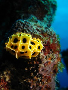 Nudibranch - Macro Life